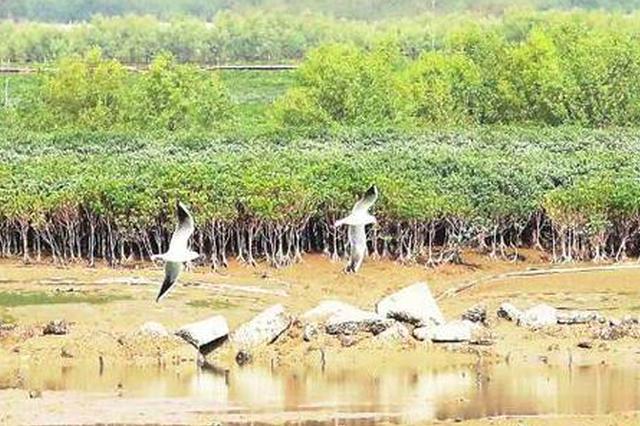"""央视报道厦门人工种植红树林 筑起海上""""绿色长城"""""""