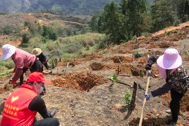 """福州市林业部门多措施力保造林绿化""""不误时"""""""