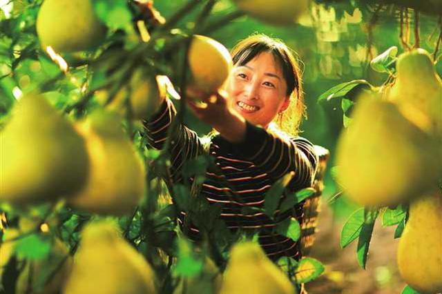 漳州云霄:全力打通滞销农产品出路