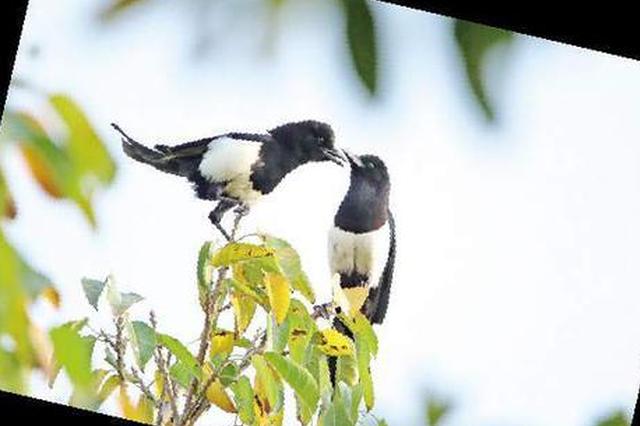 厦门目前野生鸟类共381种 近期夏候鸟陆续返厦