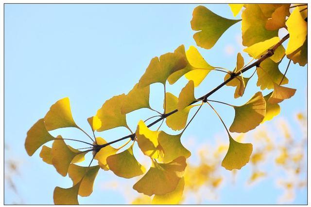泉州市现有27种国家级重点保护野生植物 一级有四种