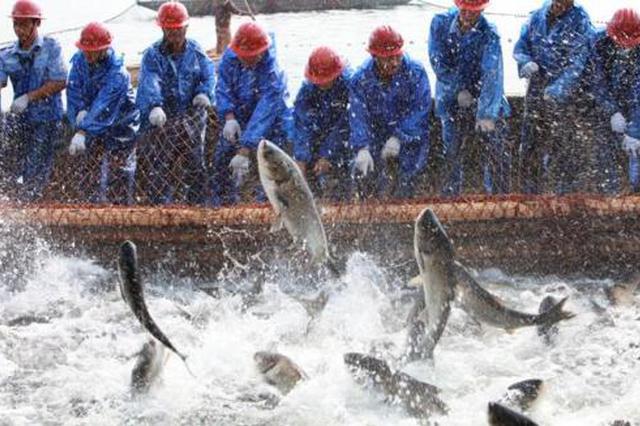 金枪鱼游进来鲍鱼游出去 厦门现代渔业转型升级亮点纷呈