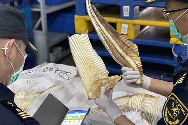 深海长尾鲨鱼骨混进干鱼骨头堆 蒙混进境被海关查获