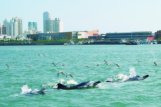 厦门首个民间中华白海豚观测点设立 可近距离看海上国宝