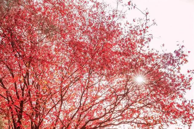 今天平均气温如果低于22℃ 厦门可宣布入秋