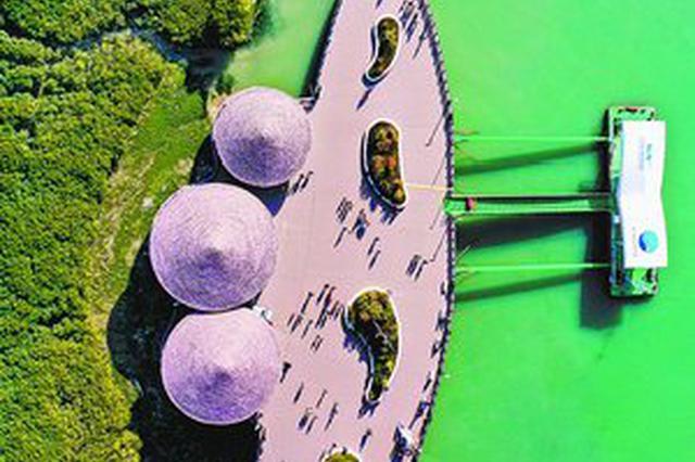 翔安下潭尾红树林湿地生态公园成新晋网红打卡地