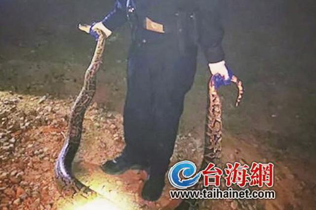 漳州长泰:民警勇擒4米长大蟒蛇