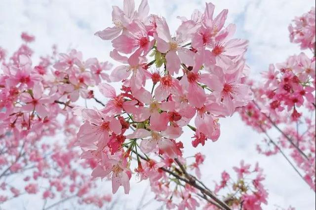 美爆!福建赏花图鉴来了!你想要的春天在这里!