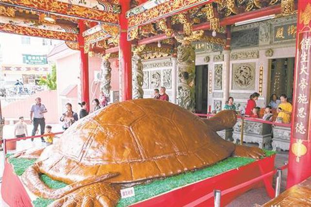 最高罗汉松、最大糯米龟 两项世界纪录在德化诞生