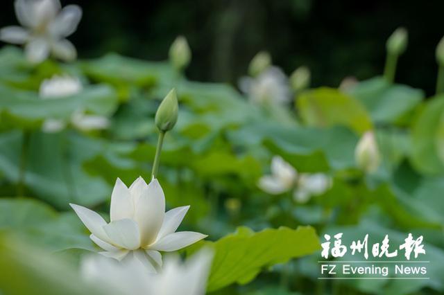 榕城五月赏花地图来了