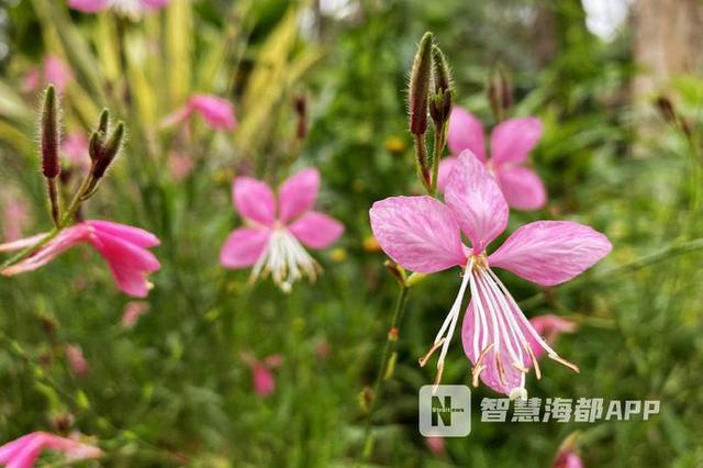 云集1500种花卉, 福州千卉园奇异芬芳