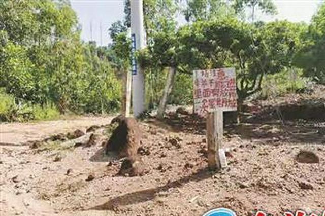 漳州:多只羊死在杨梅林,谁干的?
