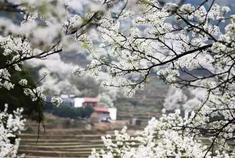 赏花攻略:春天就躲在福建这些地方