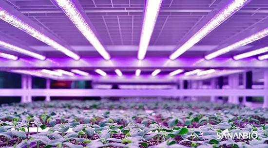 育苗植物工厂亮相2020厦洽会 中科三安推动中国育