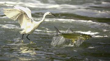 候鸟南飞季至少175种候鸟来厦