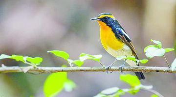 厦门增加鸟类鸟种纪录