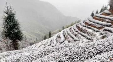 福建首场降雪美翻了