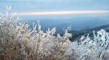 福建多地出现雾凇景观 美如仙境