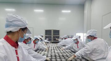 甘肃聚春园福定公司正式投产