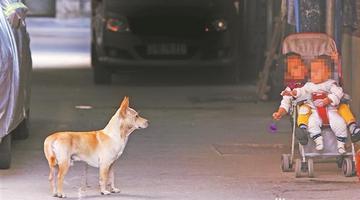 泉州新规:养烈性犬最高罚5000