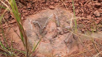 上杭恐龙足迹科考又有重要发现