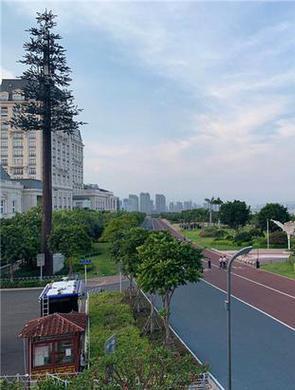 8月起游客可驾驶巴士到厦门滨海浪漫线