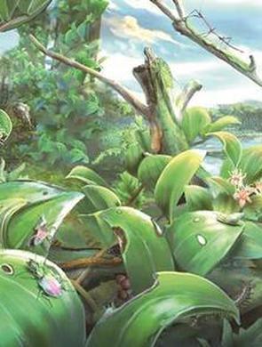 漳州漳浦发现1500万年前化石宝库