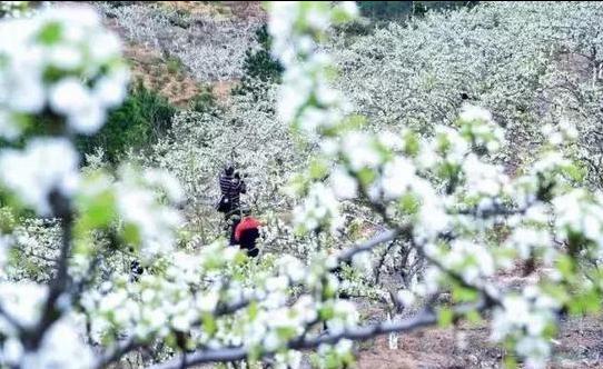 图片来源:上杭旅游