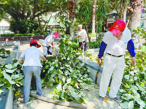神山三航小区老人督导队队员修剪小区树木。