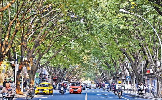交通路浓密的树荫让人如同穿梭在森林中。记者 郑帅 摄
