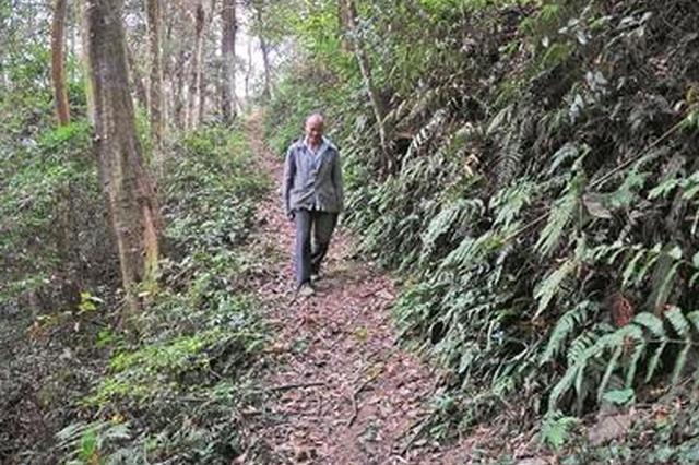 永春护林员守护林场半世纪 通讯凭传话巡山靠两腿