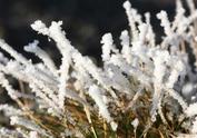 福州气温创今年新低多地霜冻结冰 15日起升温明显