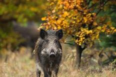 福建修改森林和野生动物类型自然保护区管理条例