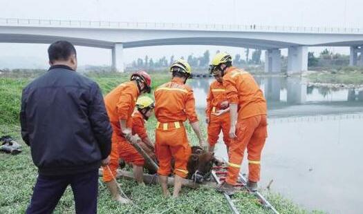 厦门:300斤重小牛河边失足深陷滩涂 消防奋力救起