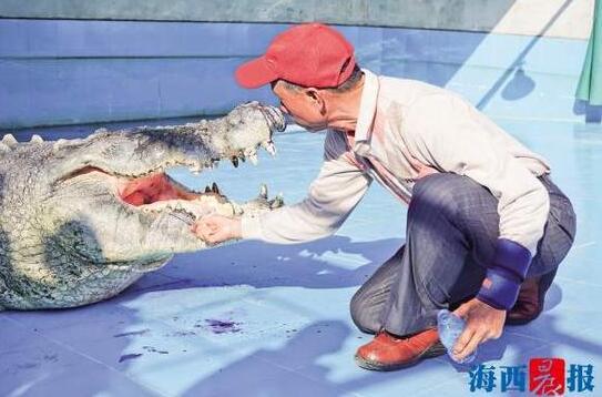 台湾鳄鱼王小河厦门安家 饲养员老河漂洋过海来探望
