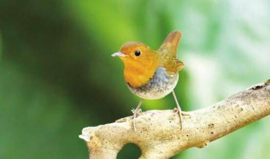 """近期大批候鸟飞抵厦门 """"鸟人""""教您文明拍鸟观鸟"""