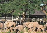 狂野的激情 南非生态蜜月地