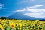 北海道之夏 在花海中度蜜月