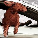 我们咨询了专家:为什么狗狗喜欢坐车呢?