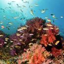 """原来东南亚也有媲美帕劳的""""海底的潘多拉"""""""