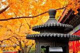 用一场诗意的红叶狩 告别整个秋天