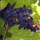 盛产最受欢迎葡萄酒?在意大利这个地方与美酒相遇