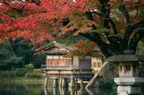 一期一会红叶季 阴翳之美遇上缱绻秋意