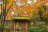 京都私藏的这些红叶胜地让人惊叹不已