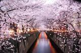 春节旅游避雷贴 日本人心目中已经沦陷的10大景点