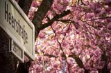 看樱花何必执着打卡日本 今年去一个人少景更美的地方