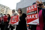 继奢侈品牌纷纷禁用皮草后 美国加州的毛皮禁令或将执行