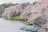 全球五大最美春天:京都白,波恩粉…每一个都美到炸