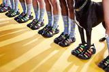 Gucci魔术贴圆头凉鞋被指抄袭 对方用一张黑狗照回应