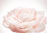 DIOR迪奥花秘瑰萃系列 带给你一个玫瑰色的清爽夏日